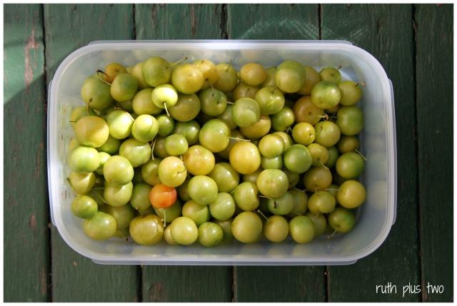 green plums