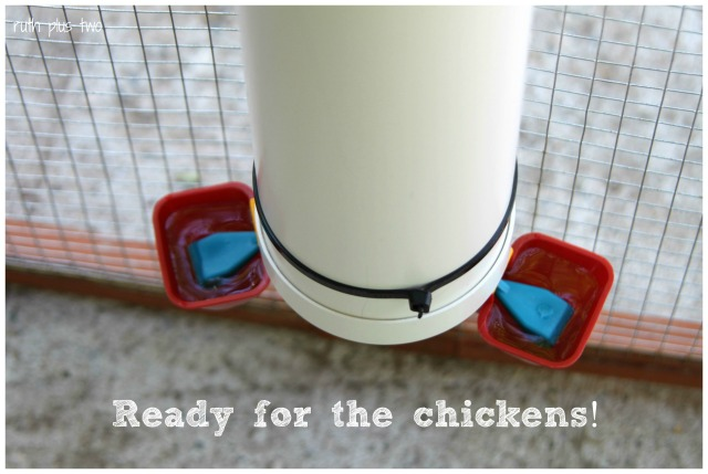 ready for chickens