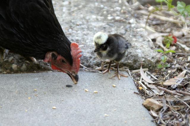 Chick 2